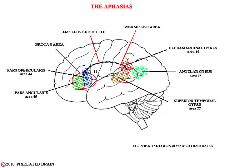 the aphasias
