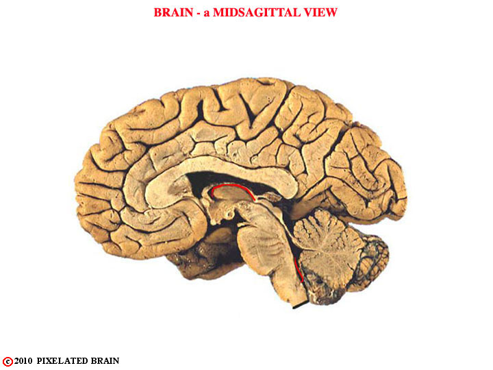 gross brain, midsagittal